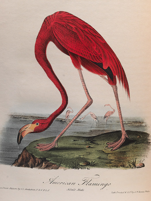 Audubon2jpg